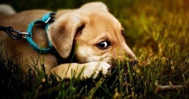 3 Surprising Ways to Save Money on Pet Care