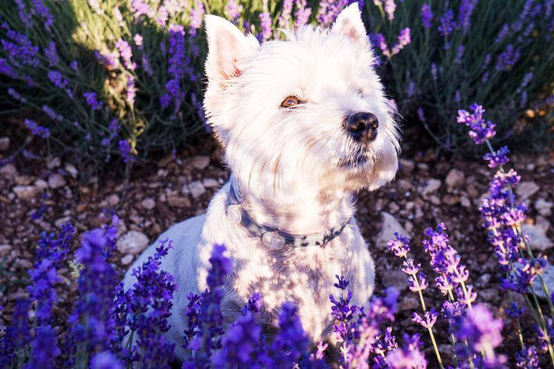 inpeaks.com - InPeaks Ideas - 4 Natural Treatments You Should Consider for Your Pets - Digital Blogs